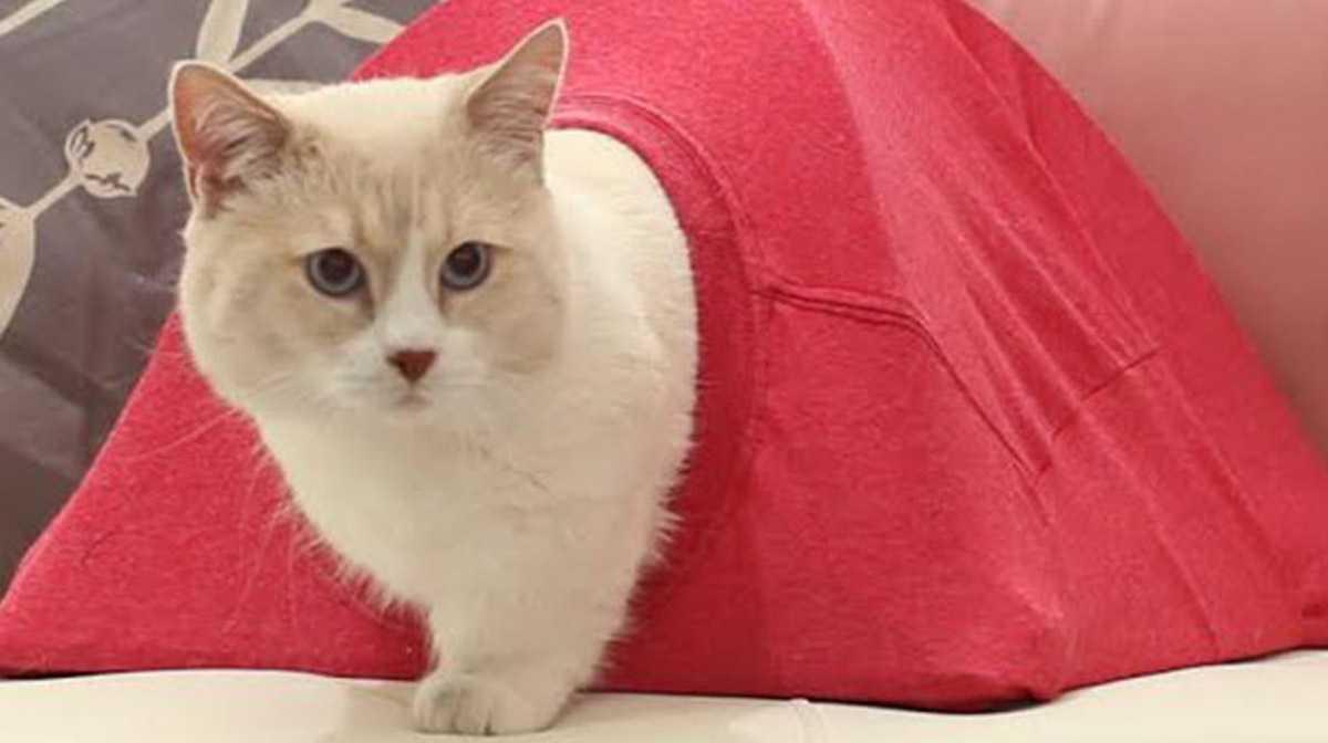 Дом для котика из старой футболки